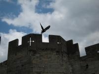 Eagle, Warwickshire Castle, England