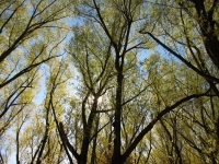 Trees, Logan Canyon, Logan, Utah